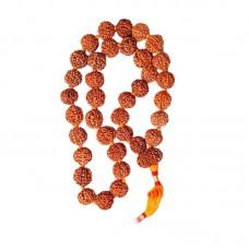 Seven Mukhi Rudraksha Kantha Mala