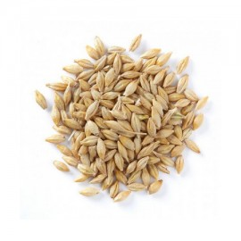 Barley Grains (Jau)