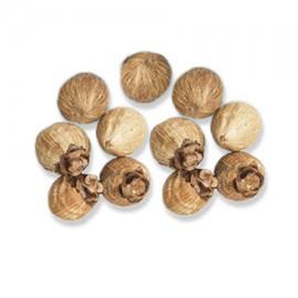 Laghu Nariyal  Sriphal - Small Coconut