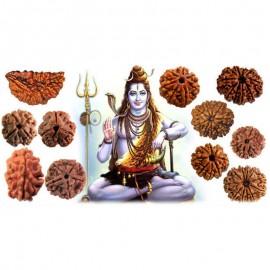 Free Rudraksha Consultation