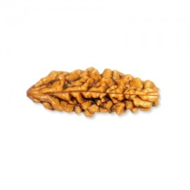 One Mukhi Shiva Rudraksha From Java